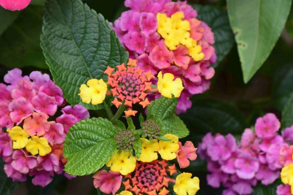 Cedar Grove Florist Yard